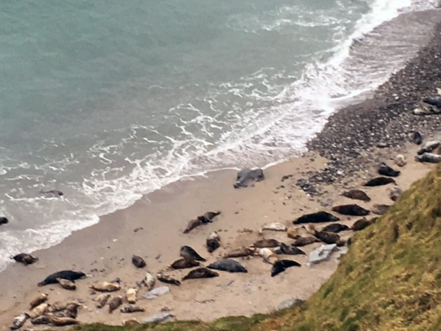 South Coast Path 2 - Seals rest far below